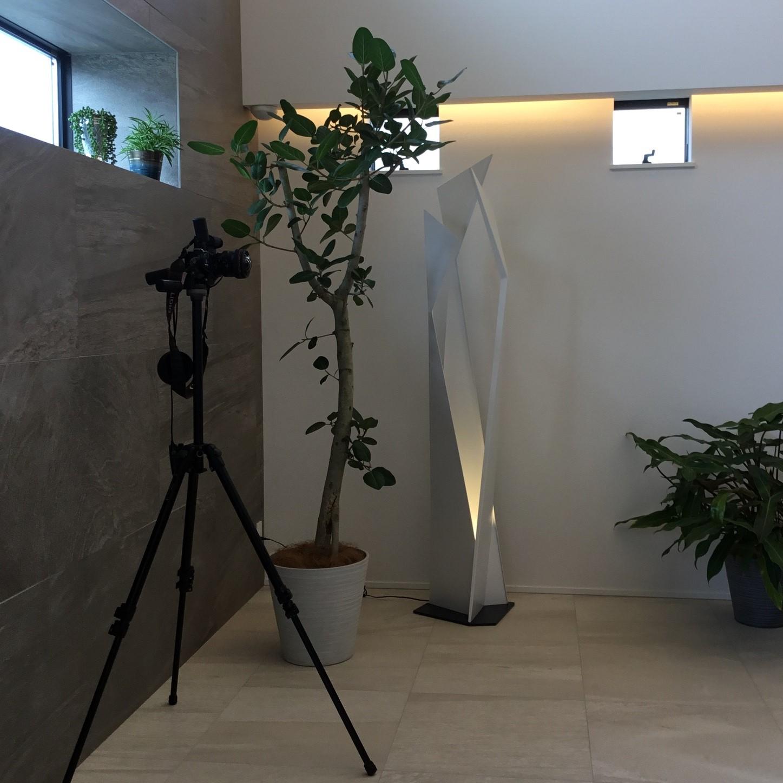 住宅撮影用グリーンの事例です。