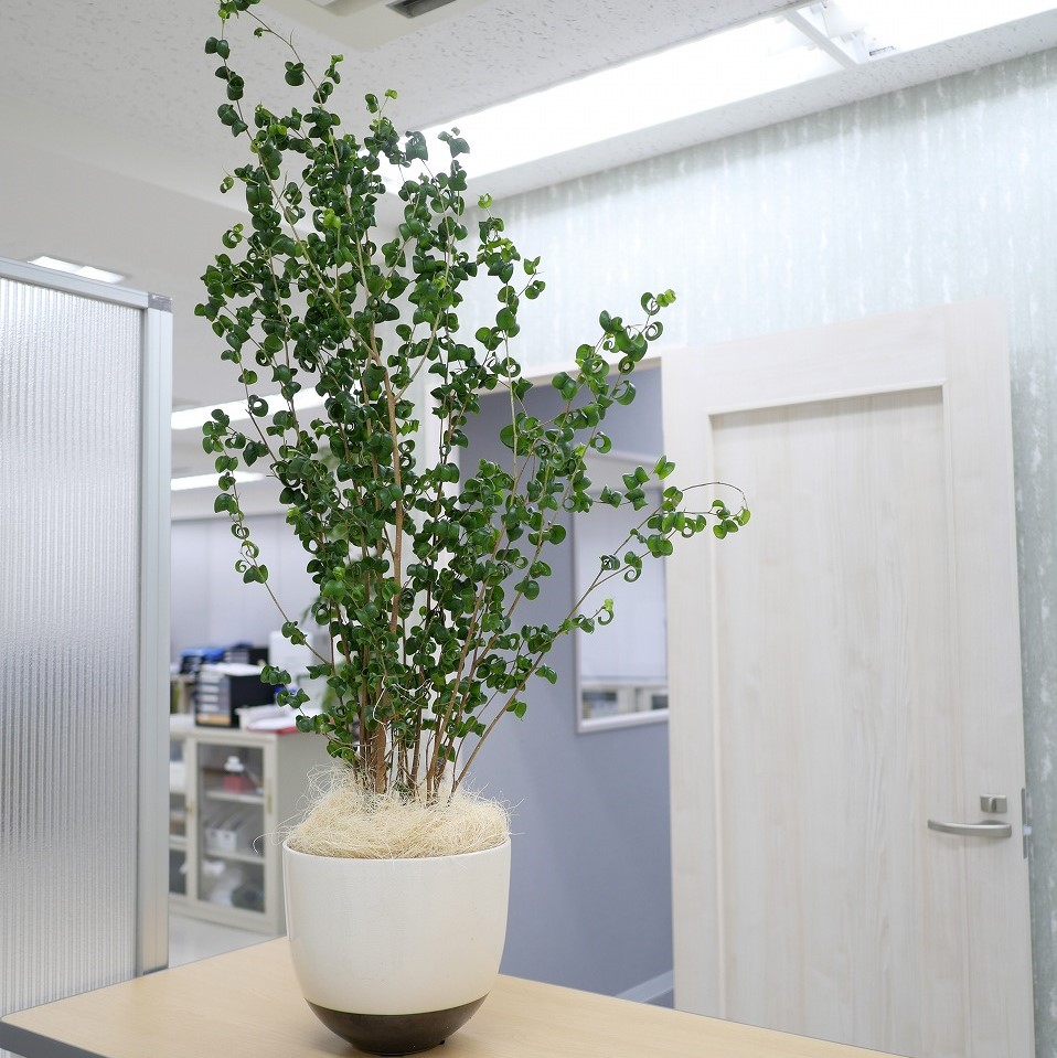 新座のオフィスの事例です。